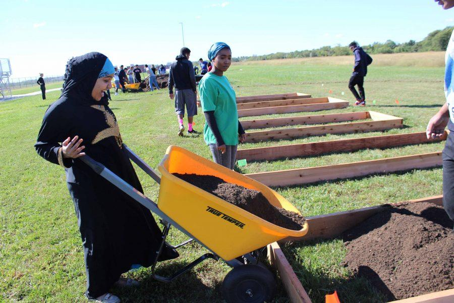 On Sep. 28 during Falcon Time, senior Ramla Mohamed fills a garden bed with dirt. The ELL leadership class took initiative to make community a garden for Staley for their semiannual project.